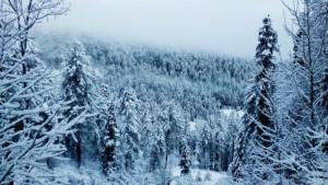 Зимний-лес-5
