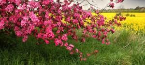 nature-spring-tree-flowers