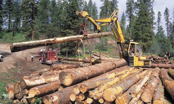юбилей, Антон выписать лес для строительства дома в петропавловске-камчатском перекрыть клапан